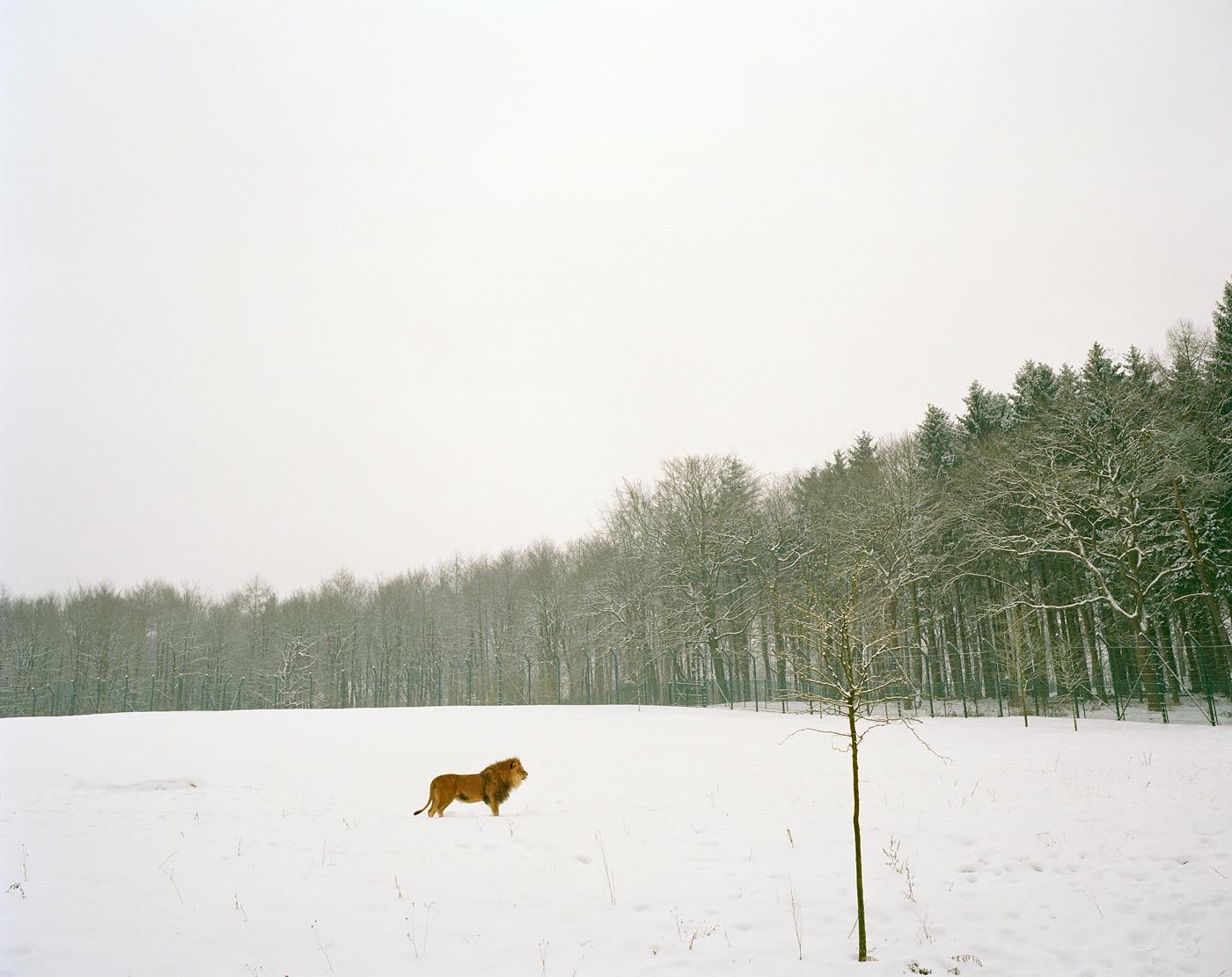 Sabine Bungert Photography, Ausstellungen