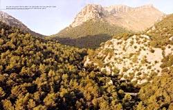 GEO SAISON Selva, Mallorca